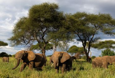 12 DAYS: CAMPING SAFARIS TO TARANGIRE