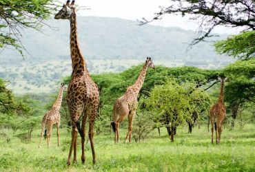 15 DAYS LUXURY SAFARIS