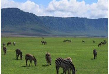 TANZANIA WILDLIFE TO SERENGETI AND NGORO NGORO SAFARIS