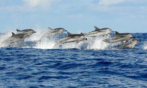 Trip Dolphin Bay